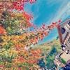 高尾山に登らずに麓で過ごす紅葉の季節。