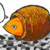 我が家の金魚ミステリー 何故?その金魚はタコツボに入ったのか?