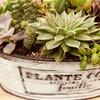 銀月・センベルビウムなどの多肉植物を苔玉仕立てに!親子で楽しめる寄せ植えとは