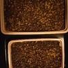 サボタニ・ガステリア播種から一週間経った話