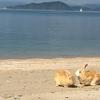 大久野島、地図にない毒ガス島からうさぎ島へと変遷を遂げた瀬戸内海の小島