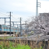 阪和線代走3ドア普通、桜×阪和線