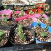 枝豆・落花生の発芽