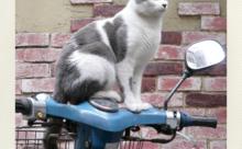 ネコ英語「これは私のバイクですが何か?」