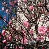 春の訪れの予感☆