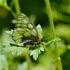 初夏に向かって 1 ウスバシロチョウ