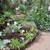 ウェルカム・ガーデンの冬支度