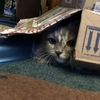 猫と遊ぶ週末の朝:クランベリーでケーキとジャム