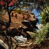 猿江恩賜公園の下池