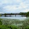 菖蒲池(奈良県奈良)
