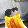 外猫と家猫の関係