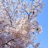 さまざまの事おもひ出す桜かな