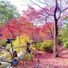 弥彦公園 紅葉谷