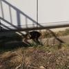 ◆山の猫達