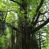 お江戸東京と世界樹と会う旅。その1