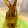 ウサギのちまきの機嫌が悪い!原因を探る