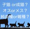 猫を飼うなら、子猫or成猫?オスorメス?純血種or雑種?