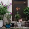下町の軒先花壇