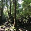 【屋久島 もののけ姫の森】初心者の白谷雲水峡・太鼓岩トレッキングまとめ|体験談