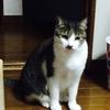 【子猫】ちょこちゃんと新年の挨拶に実家に帰省してみたとき。