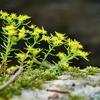 もう一つの横谷峡≪#5≫  ― 「鶏鳴滝(けいめいたき)」と黄色い可憐な花 ―