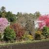 農園日誌ー里の春