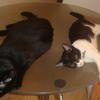 今日の黒猫モモ&白黒猫ナナの動画ー541