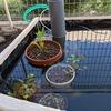 庭に池をつくる(⑩ろ過装置編その3)