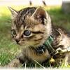 猫 (=ΦωΦ=)