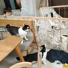 猫さんと障子