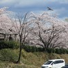 〈グランツァ〉春の香りに包まれて・・・