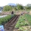 農園日誌Ⅱー「活きること」ーPART12ー新たな仲間達