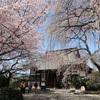 日本一大きな閻魔大王像と庭いっぱいの見事な桜 長野市「典厩寺の桜」