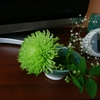 生け花もどき?でお部屋の雰囲気も私の気分もアップ