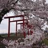 堂ノ前公園と白水川堤防桜並木 春の東根市、桜スポットをご紹介!🌸