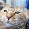 7月前半の #ねこ #cat #猫 どらやきちゃんB