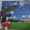 ❝マザー牧場(前編)❞ 愛犬とおでかけ-千葉県観光🎵 2020年12月19日