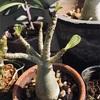 面白い形の植物