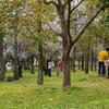 春を満喫しに大阪鶴見緑地公園へ。桜とか植物園とかを楽しむ。