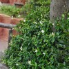 春から咲く花
