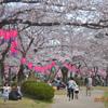 『天気雨☀☂』の中を桜見物に。