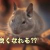 【チンチラ】その存在に気付いてしまった…!【ネコ】