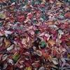滑り込みセーフで秋を堪能