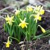 黄色から春