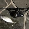 カップルがなんだ!深夜の門司港レトロで知らないおじさんとアジ釣りを堪能する!