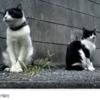猫の素敵な映像
