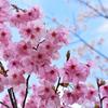 平和を願うピンク色