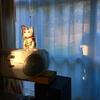 黄金に輝く招き猫