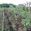 農園日誌ー野菜の宅配ーPARTⅣ