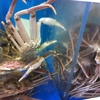 【間人蟹】丹後半島で蟹を喰らう